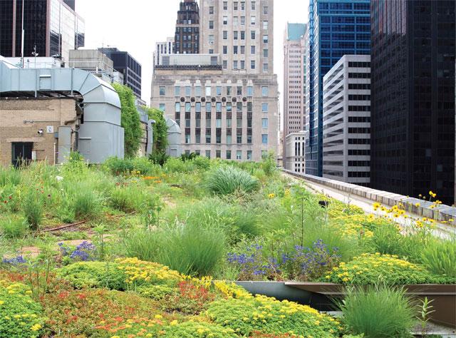 city hall green2